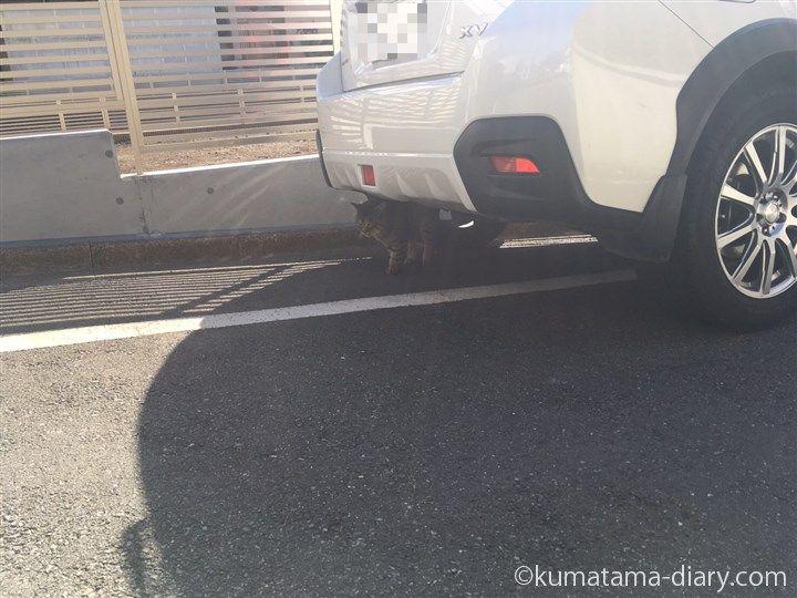 車の下にキジトラ猫さん