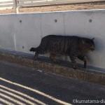 世田谷区中町のキジトラ猫さん