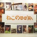 3331Arts Chiyodaで猫写真展「ねこの○○展(ねこのまるまる展)」を見ました