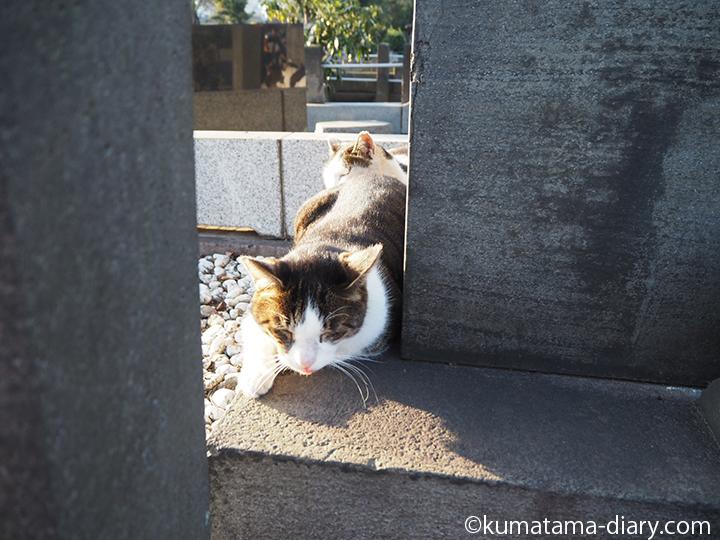 後ろにもキジトラ白猫さんが