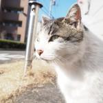 いつもと違う場所にいた近所のキジトラ白猫さん