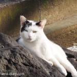 雑司が谷の猫さん
