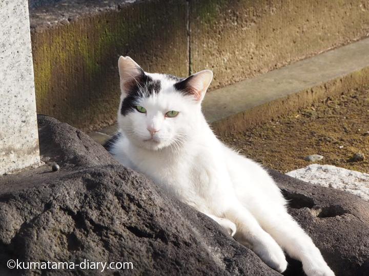 お墓の前の白黒猫さん