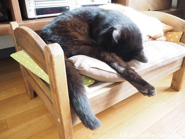 IKEA猫ベッドで眠るくま