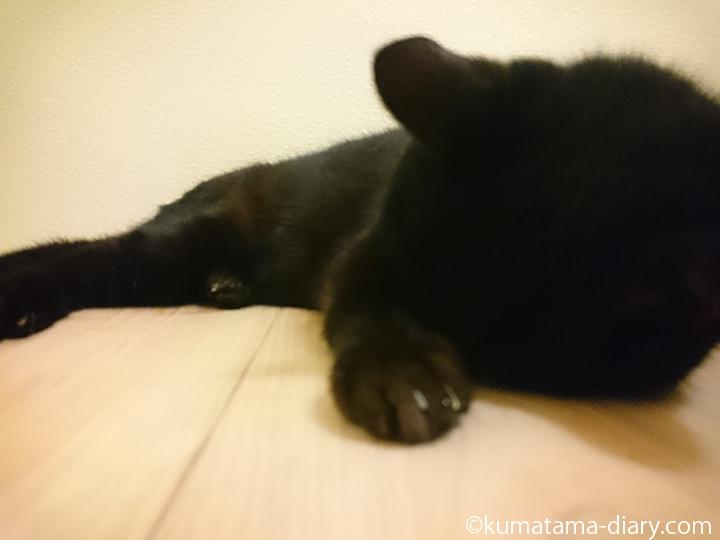 顔を隠して寝るくま