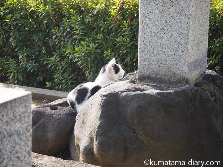 お墓の前の猫さん発見