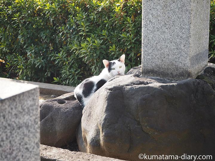 お墓の前の猫さん