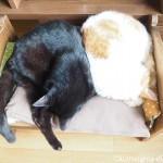 IKEAの「DUKTIG 人形用ベッド」で背中をくっつけ合って眠る猫