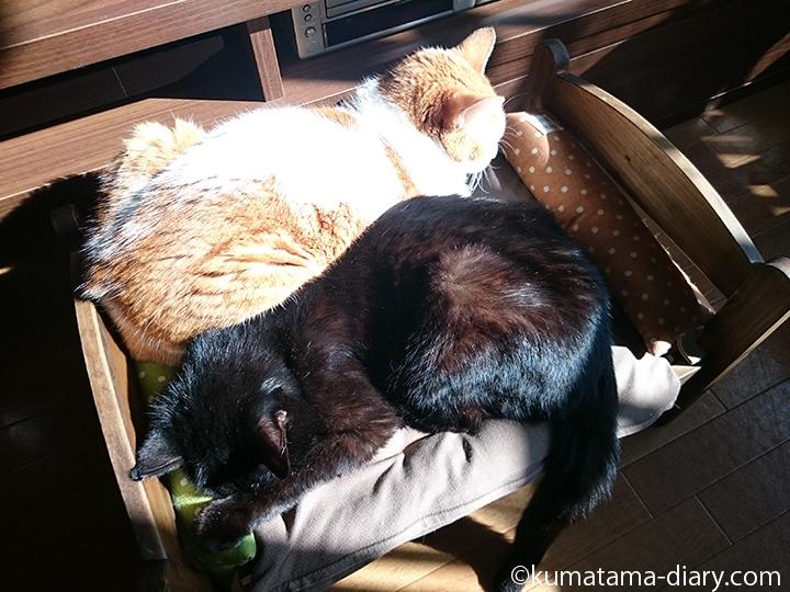 IKEA猫ベッドで眠るくまたま