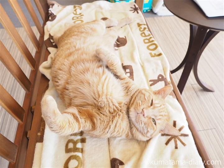 ベンチで寝る茶トラ猫さん