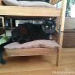 IKEA猫ベッドのくま