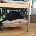 口内ケアを嫌がってIKEAの「DUKTIG 人形用ベッド」に隠れた猫