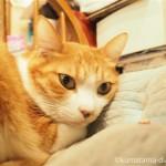 【浅草】2匹の看板猫がいる老舗の喫茶店「若生(わかお)」へ行ってきました
