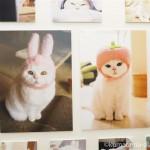 「ねこ休み展 冬 2017」で美人白猫うらちゃんの写真を見ました