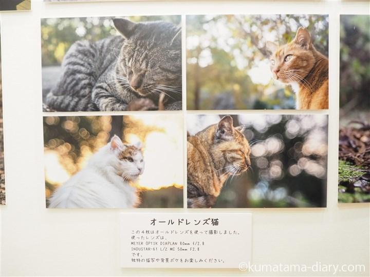 オールドレンズ猫
