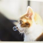 「ねこ休み展 冬 2017」であおいとりさんの鼻提灯猫の写真を見ました