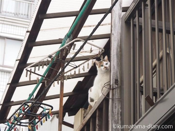 物干しの上に行こうとする猫さん
