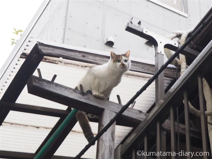物干しの上に乗った猫さん