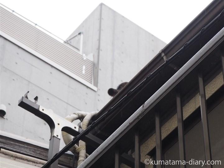 屋根の上に去った猫さん