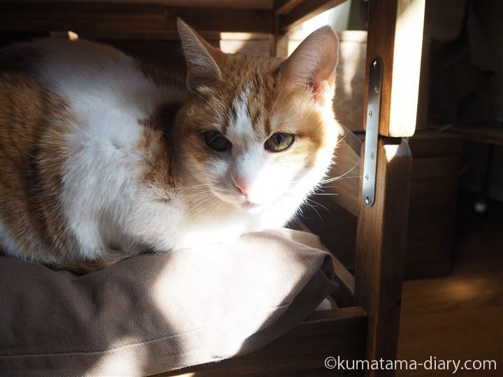 IKEA猫ベッド下段のたまき