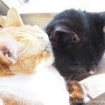 2段ベッドにしたIKEAの「DUKTIG 人形用ベッド」でも一緒に寝る猫