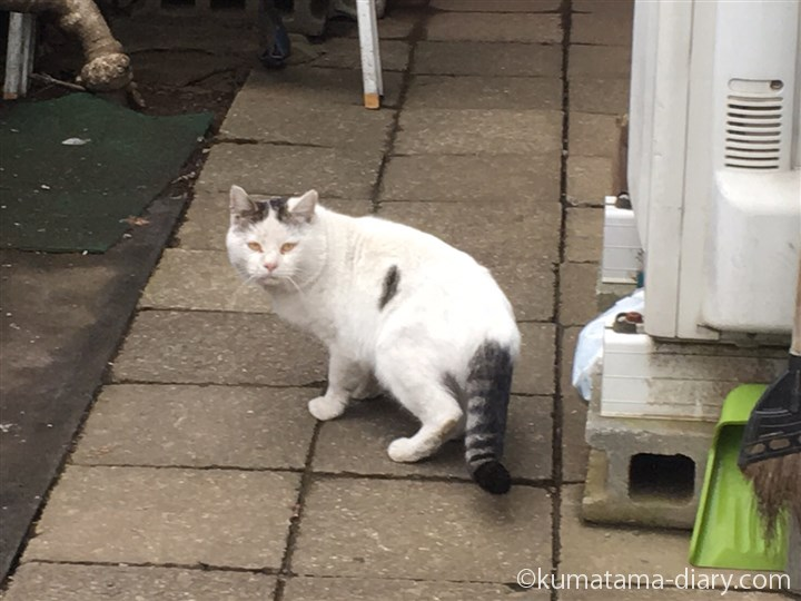 入間のボス猫