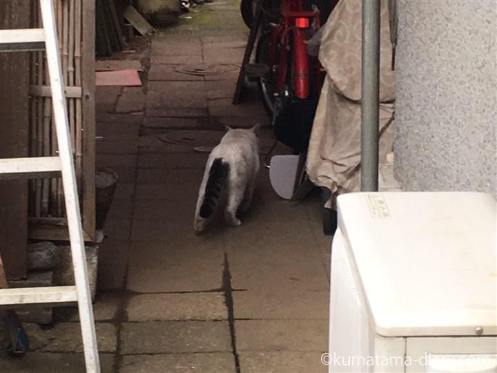 立ち去るボス猫