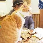 【谷中】猫がいる古民家カフェ「ねんねこ家」に行ってきました