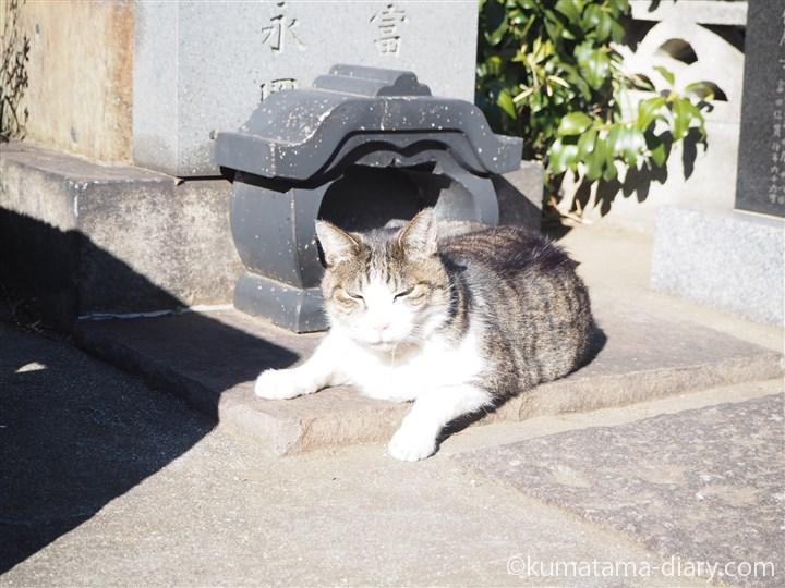 よだれが出ていたキジトラ白猫さん