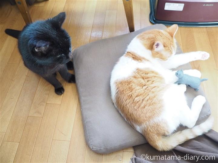 くまとたまきと木彫り猫