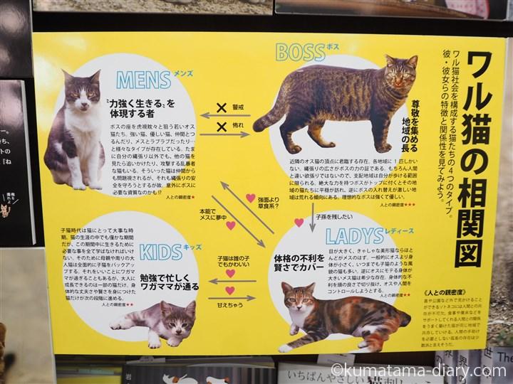 ワル猫の相関図