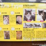 猫本専門「神保町にゃんこ堂」で『ワル猫の世界』パネル展を見ました