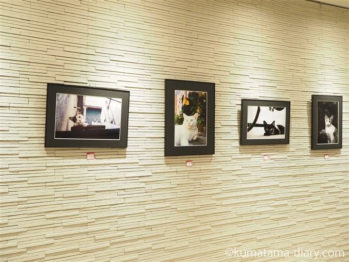 「東京猫色」写真展