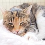 狭山市の保護猫カフェ「funnyCat」の新しい猫さんたち