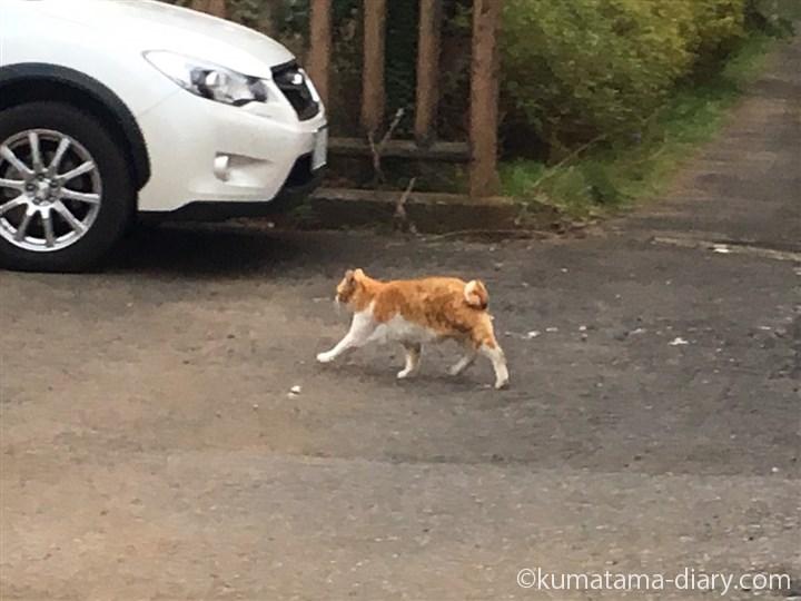 逃げる茶トラ白猫さん