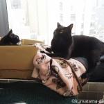 【池袋】民族衣装雑貨店「インドサラサの店」の看板猫のきんちゃんとぎんちゃん