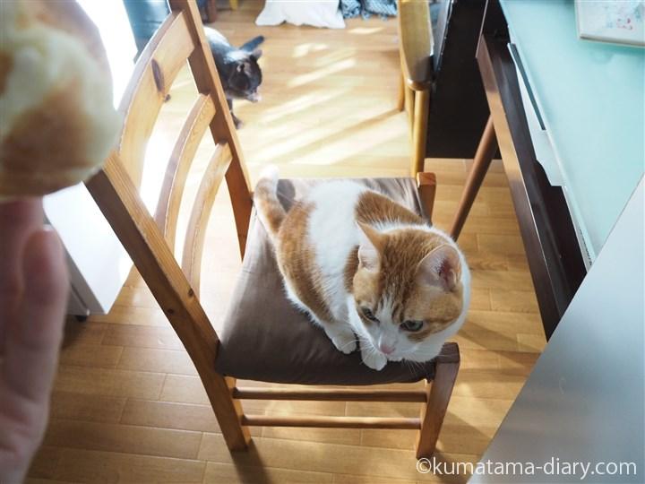 椅子の上のたまき