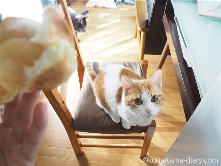 パンを襲う前のたまき