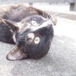 狭山市の三毛猫さんはすぐ戻ってきて目の前でごろんごろんしてくれました