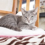 狭山市の保護猫カフェ「funnyCat」で、オシキャットにはいろんな色があることを知りました
