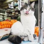 【高田馬場】加藤商店の看板猫ブッコちゃんとシロちゃん