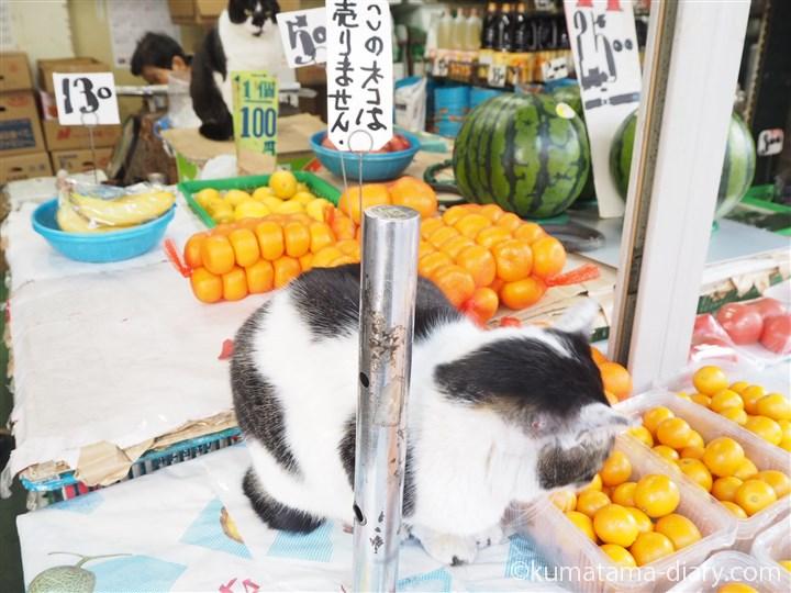 果物の間に猫さんが