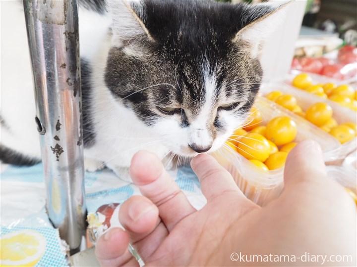 指をにおう猫さん