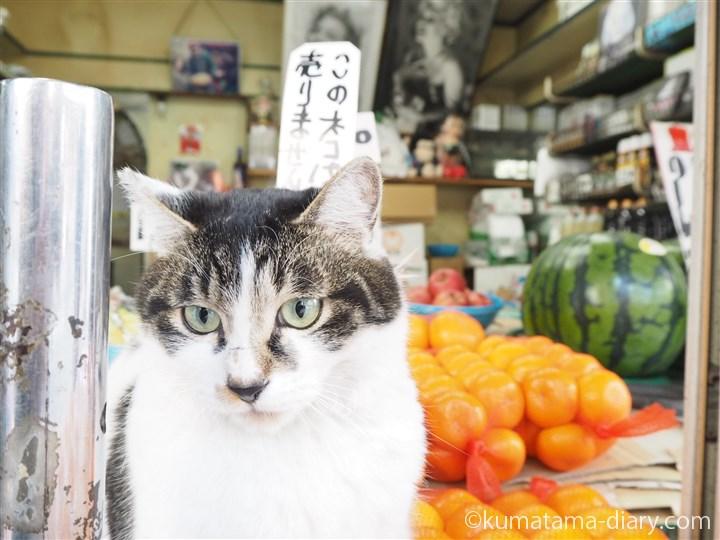 この猫は売りません