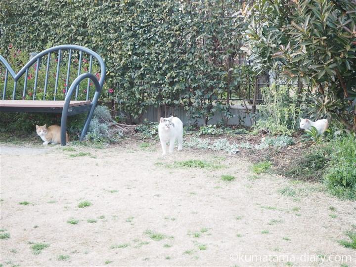 公園の猫さん