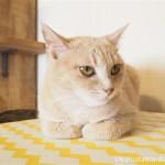 ネコヨガに興味がなかった「ネコリパブリック東京お茶の水店」の猫さんたち
