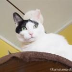 ネコヨガを高い所から見守っていた「ネコリパブリック東京御茶ノ水店」の猫さんたち