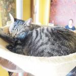 「ネコリパブリック東京お茶の水店」の猫さんへの痴漢行為を反省