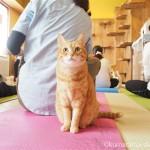 ネコリパブリック東京御茶ノ水店の「ネコヨガ(NECOYOGA)」に参加しました