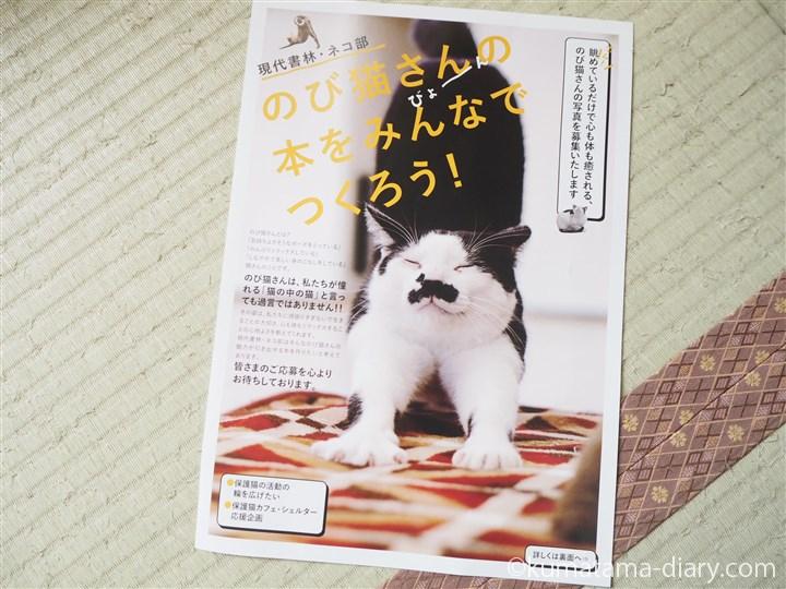 のび猫さん写真募集